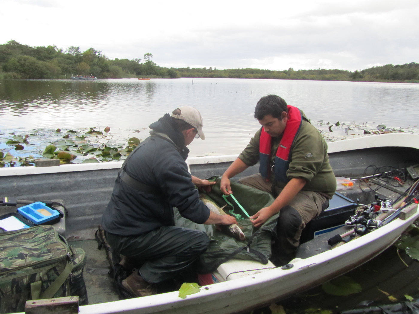 conservationists measuring a pike inside a boat on the water