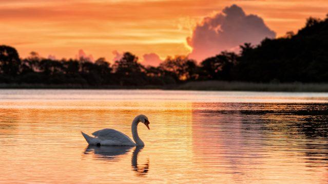 Norfolk Broads at Dawn