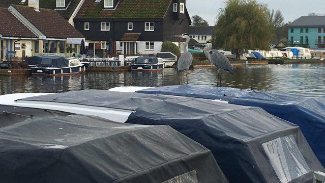 herons-on-dayboats